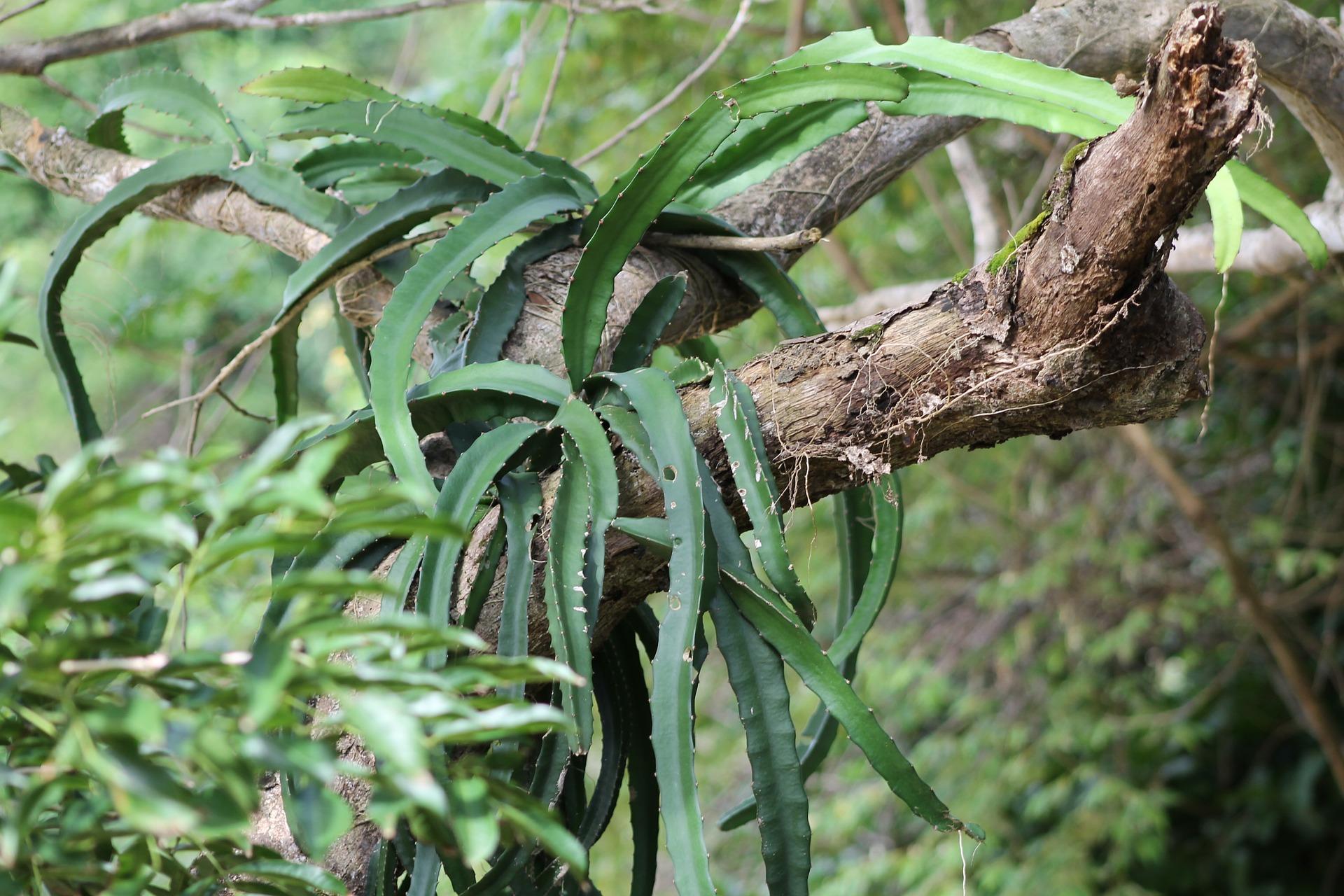tree-639145_1920
